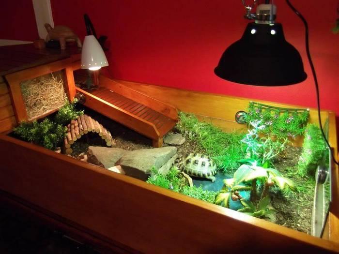 Уход за сухопутной черепахой в домашних условиях начинается с обустройства жилья