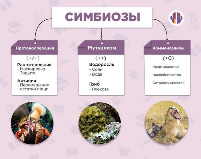 В растительном и животном мире нередко встречается явление симбиоза