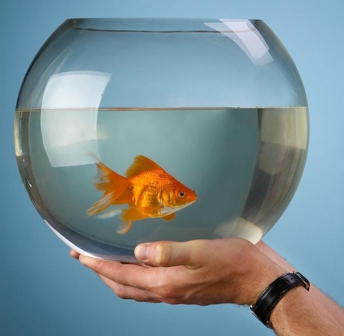 Есть советы для профилактики, которые особо важны в случае золотых рыбок