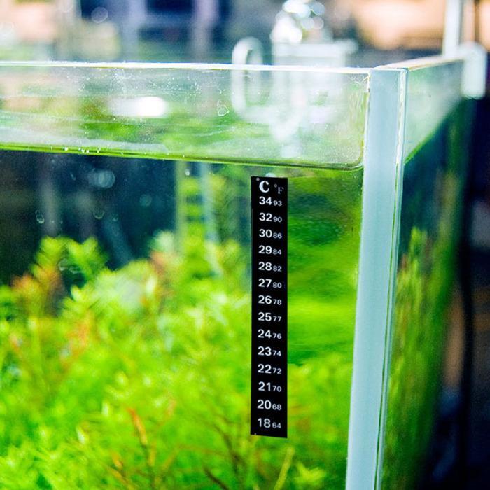 Оптимальная температура для содержания гидрокотилы трипартита — 22-26 градусов