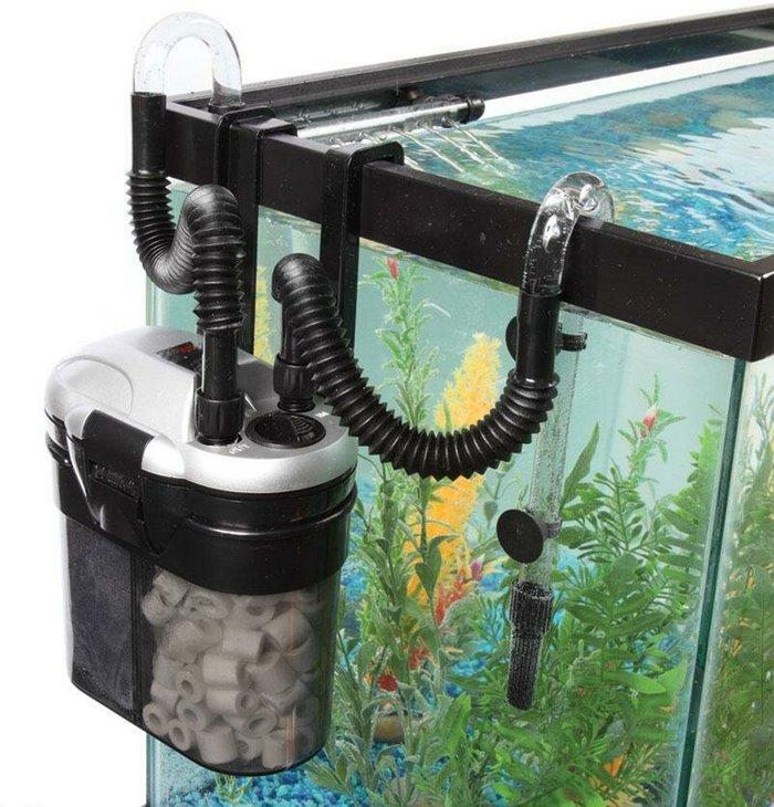 Рыба змееголов не отличается чистоплотностью, поэтому фильтр подбирать нужно особенно тщательно