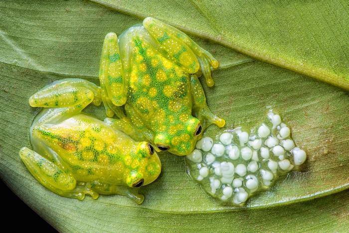 Время развития яиц зависит от вида и температуры