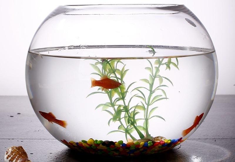 Маленький аквариум может стать причиной болезней рыбок
