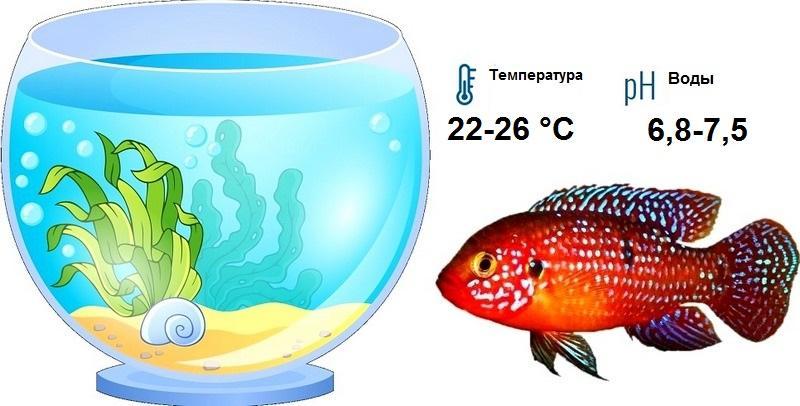 Важно, чтобы вода была чистой и хорошо насыщенной кислородом