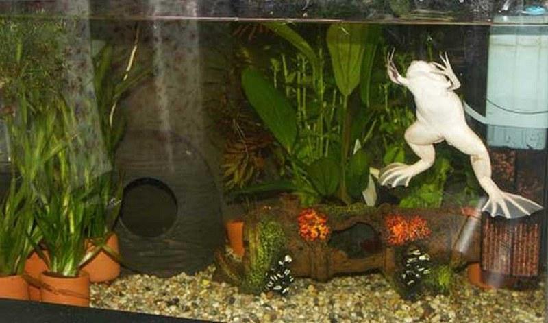Декорации в аквариуме должны быть из безопасных материалов
