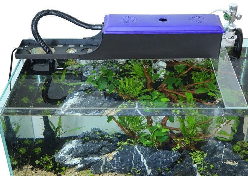 Для аквариума с золотыми рыбками рекомендуется установить мощную систему фильтрации