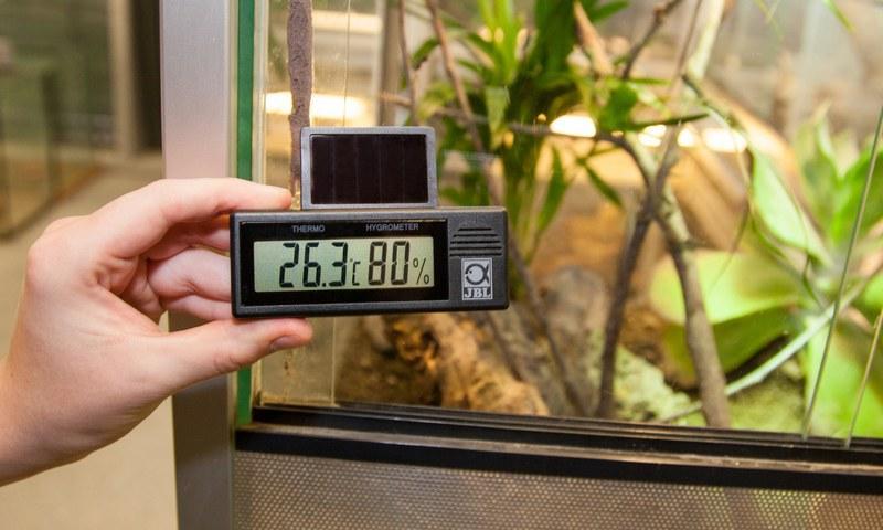Для контроля за состоянием влажности в террариуме следует установить гигрометр