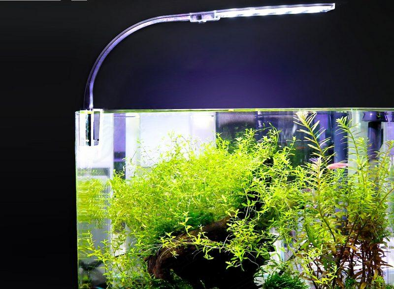 Для освещения аквариума с растением подойдут люминесцентные лампы средней и малой мощности