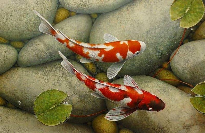 Карпы кои происходят из одного семейства с золотыми рыбками