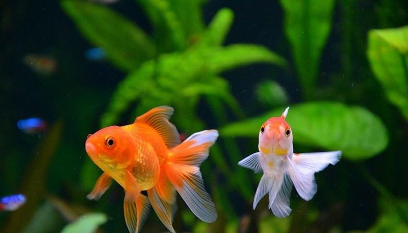 Помимо размера рыб, следует учитывать их темперамент