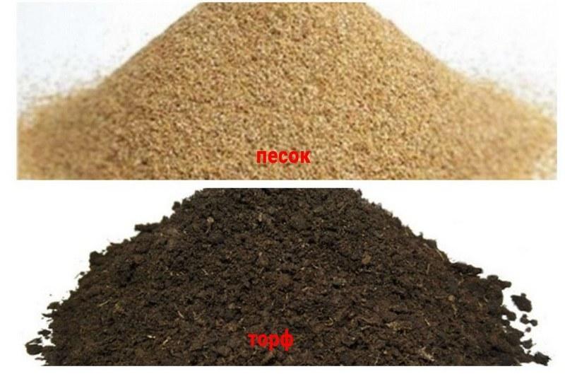 При выращивании пистии подходящим грунтом станет торф с крупным песком