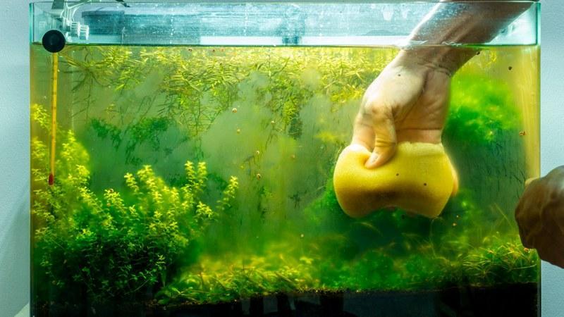 Производить уборку в аквариуме нужно каждую неделю