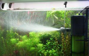 Сильное течение в аквариуме способствует разрастанию Hygrophila corymbosa