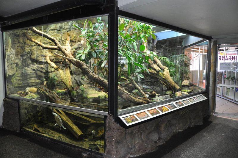Террариум для игуаны должен быть высоким и достаточно большим
