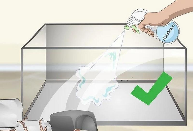 Уборку в террариуме рекомендуется проводить каждую неделю