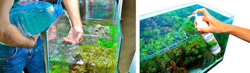 Внесение удобрений и своевременная замена воды спасет листья растения от порчи