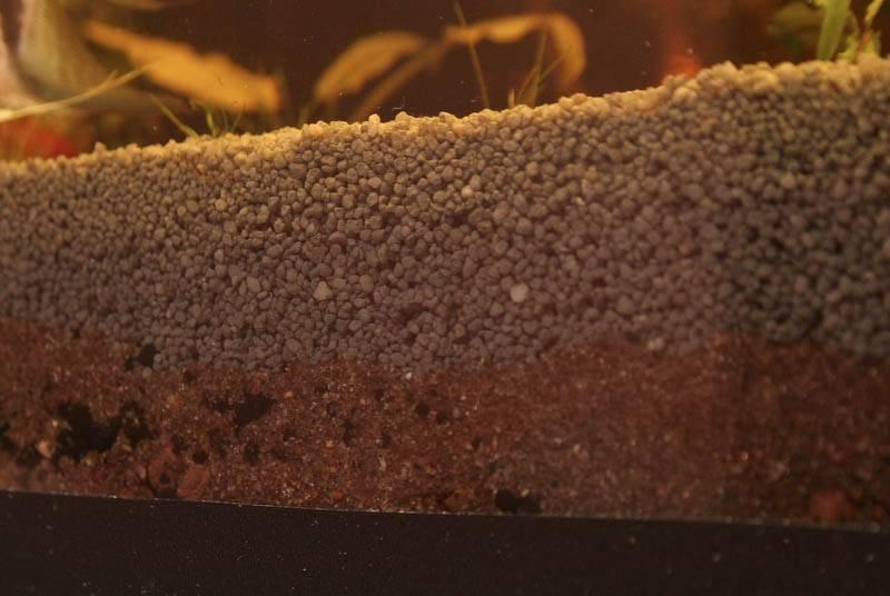 Высаживать аквариумное растение рекомендуется в питательный грунт с глиной