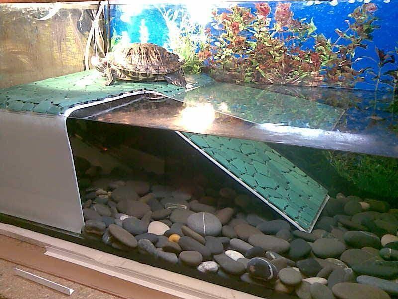 Черепахи требуют грамотно обустроенного акватеррариума