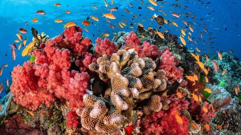 Покупка коралла должна осуществляться только в специальном магазине