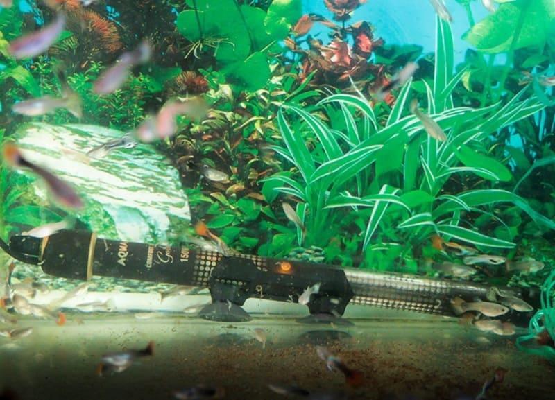 Лучше оснастить аквариум водонагревателем с терморегулятором