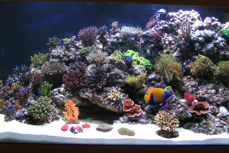 Псевдоморской вариант оформления аквариума