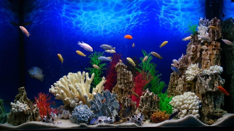 Красивый аквариум с кораллами и водорослями
