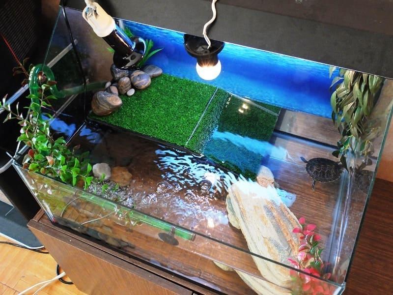 В аквариуме должен быть обязательно островок суши