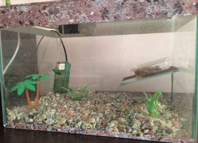 Перед помещением в аквариум грунт необходимо хорошо промыть