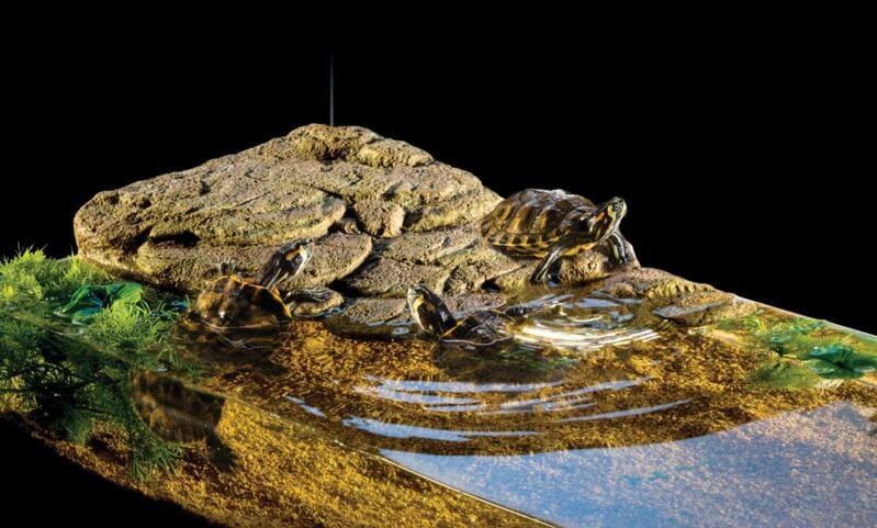Естественный островок из камня для черепахи