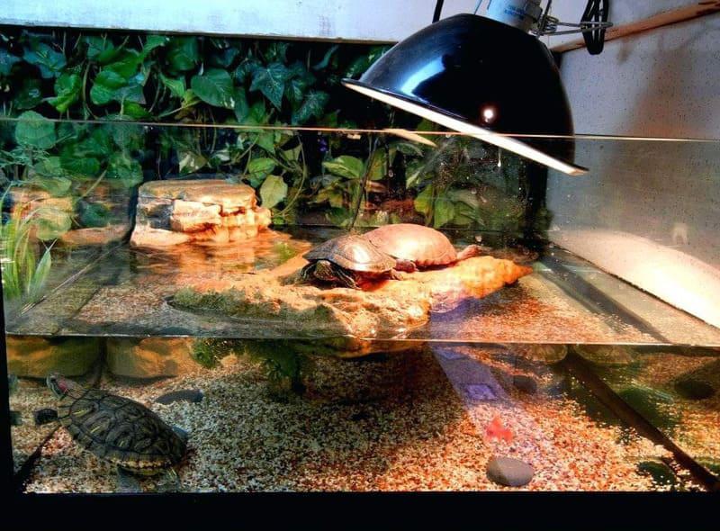 Над островком устанавливают лампу для прогрева черепахи