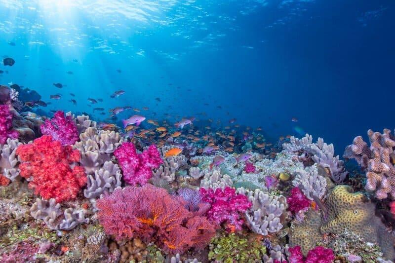 На дне океана можно встретить полипы различных цветов