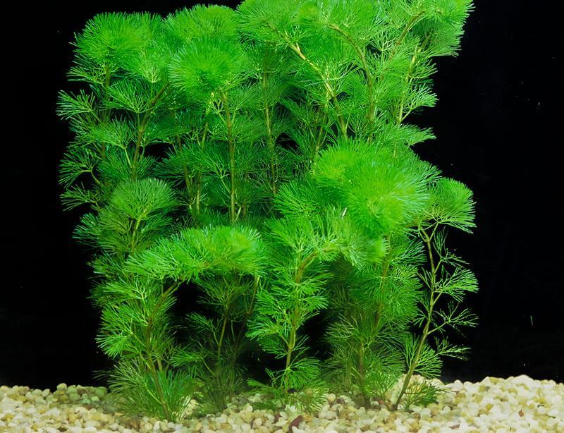 Высадка растения должна производиться неглубоко в мелкий субстрат