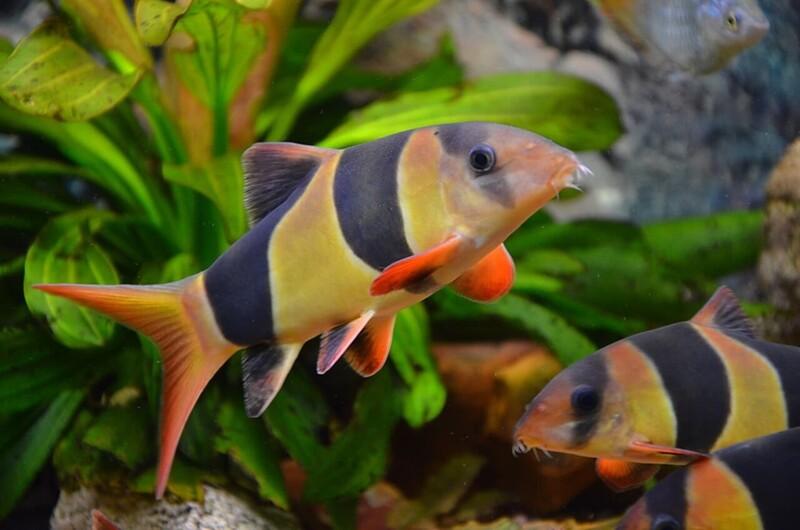Для рыбок важно создать комфортные условия, иначе они будут болеть