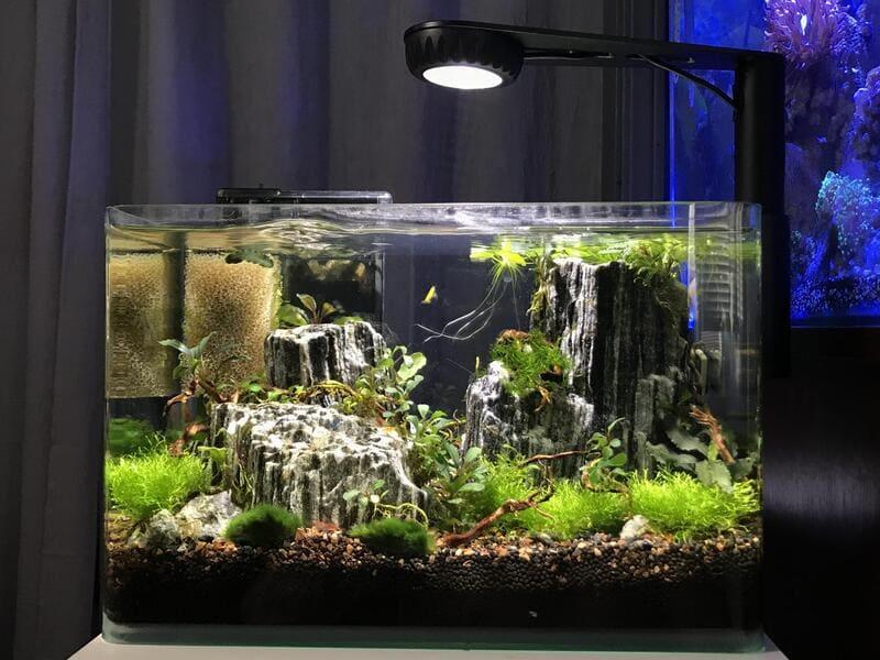 Лучше всего брать аквариум из расчета 1-2 литра на 1 особь
