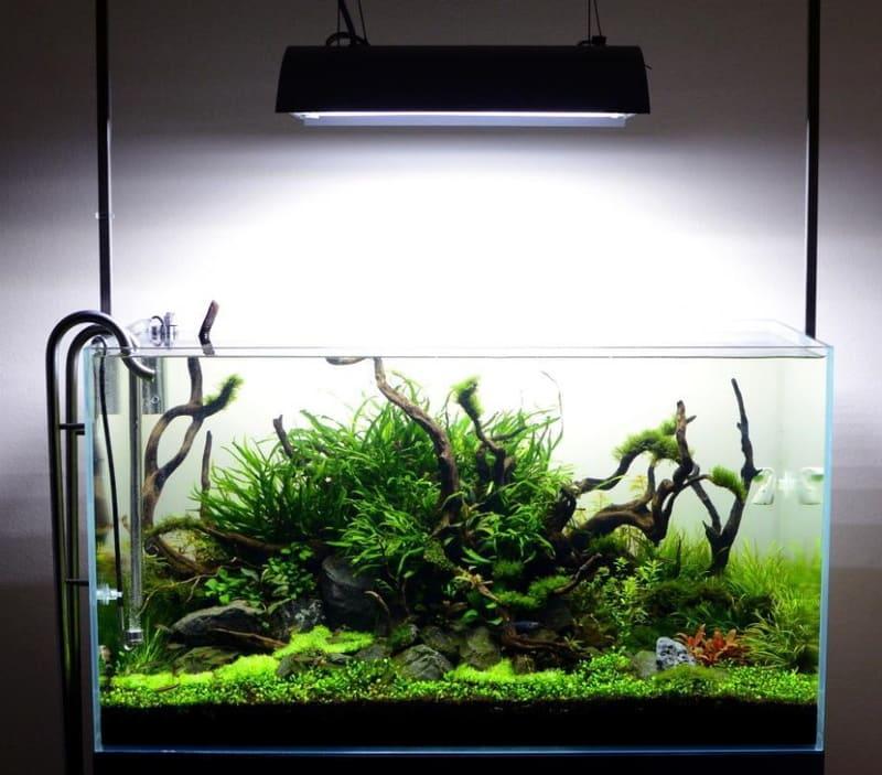 Освещение подбирается с учетом потребностей растений в аквариуме