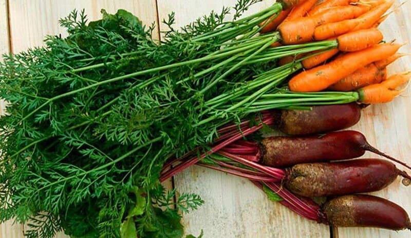 Хороший аппетит у этих рептилий на морковную и свекольную ботву