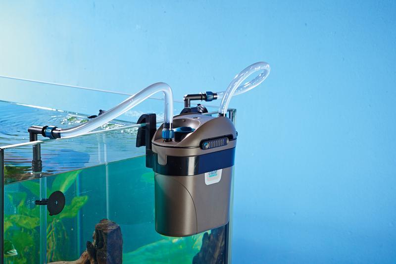 В аквариум обязательно устанавливается фильтр для воды