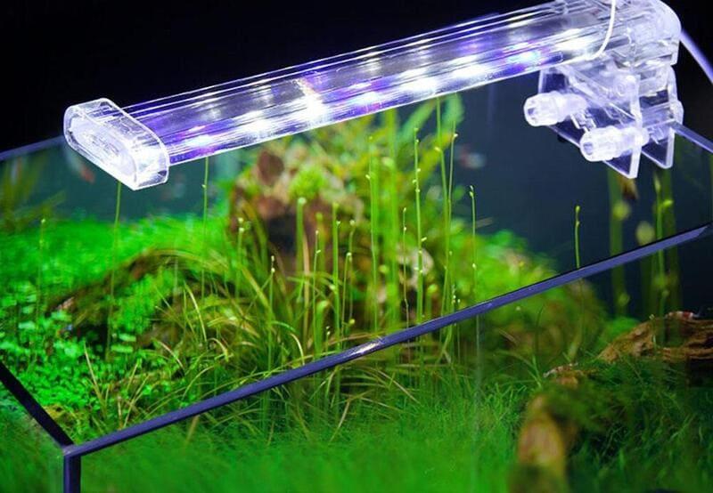Растение подсвечивают около 12 часов в день люминесцентными лампами