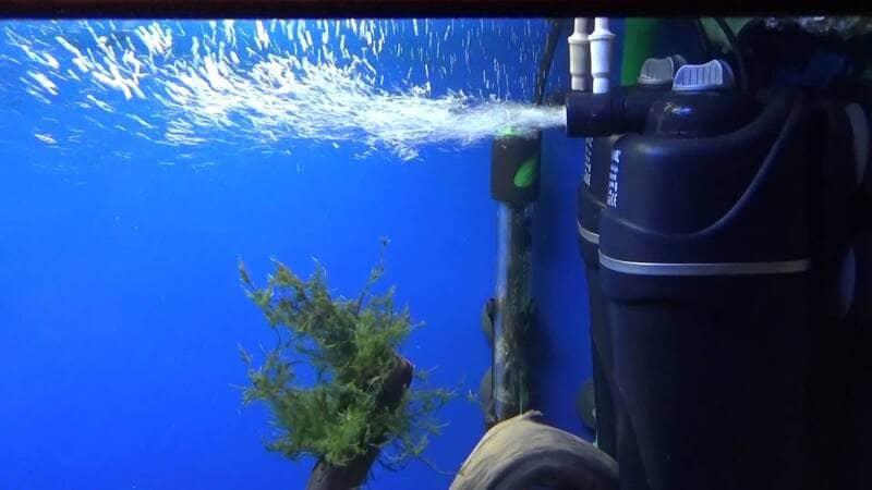 В аквариум обязательно необходимо установить помпу с аэрацией