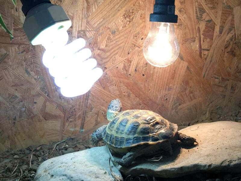 Лампу накаливания можно устанавливать только в летнее время на пару дней