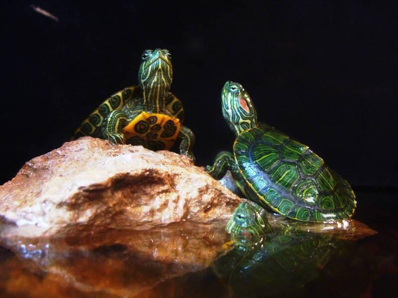Животное не может вести нормальную жизнь без ультрафиолетового освещения
