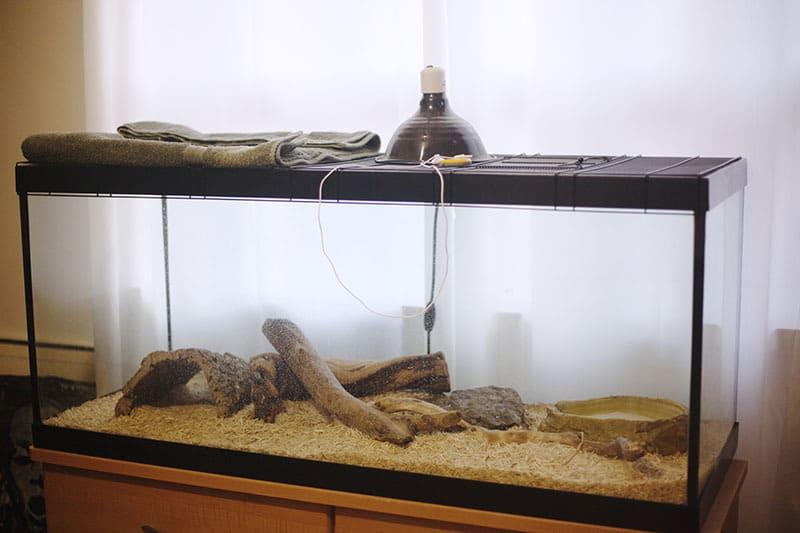 Диагональ от левого угла до правого должна быть равна длине взрослой змеи