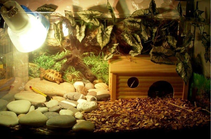 Чаще всего для черепах, змей и ящериц приемлем 12-часовой световой день