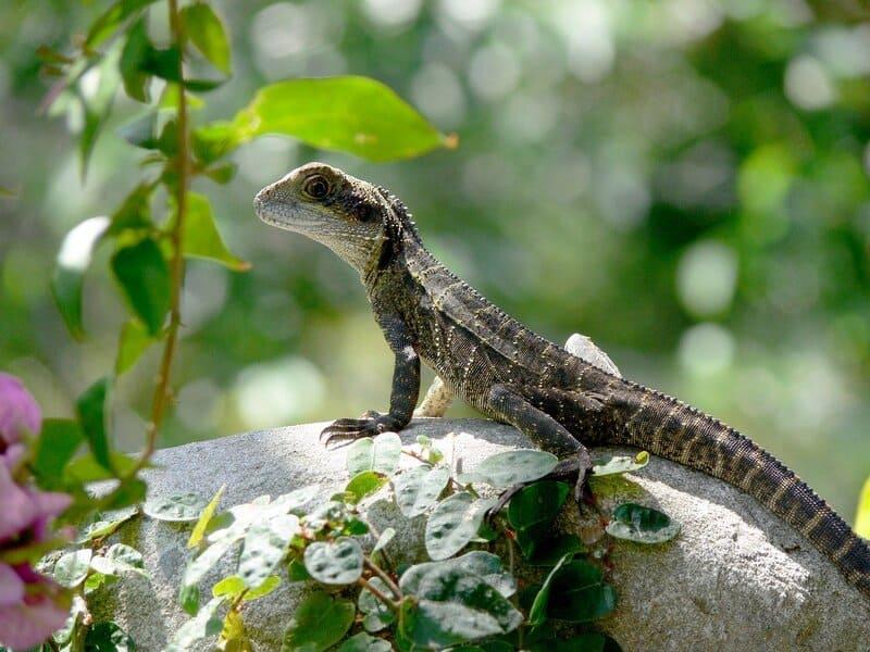 Ящерицы любят погреться на солнышке, обитают в засушливых местах