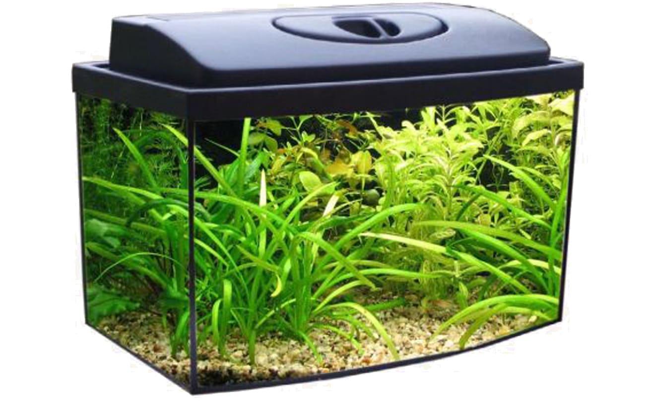 Для комфортной жизни рыбок желательно приобрести аквариум на 30-40 л