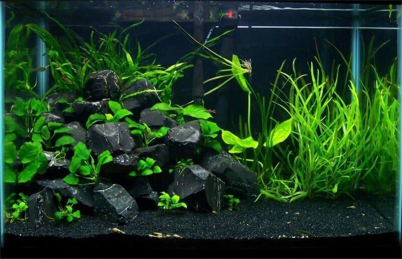 Для содержания рыбок желательно использовать грунт и фон темных оттенков