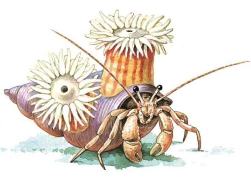 Иллюстрация симбиоза